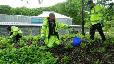 Hills Students: on placement, planting and weeding in the college grounds