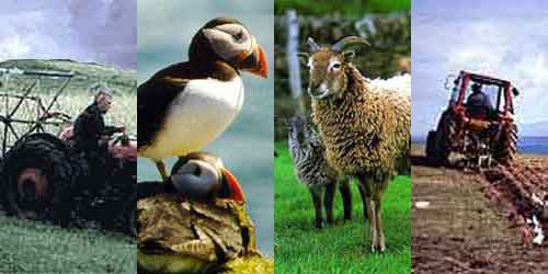 Tractor, Puffin, Sheep and Tractor